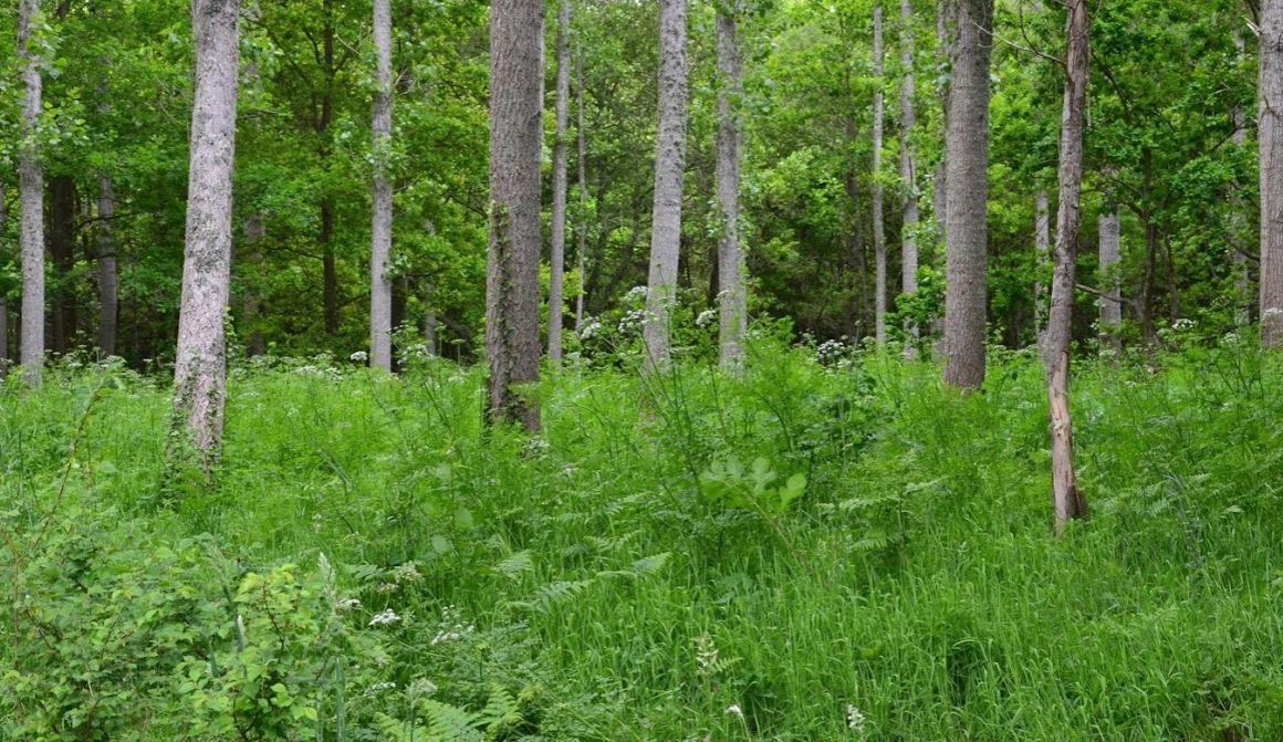 Forêt toute verte