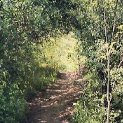 Sur le petit chemin dans la nature