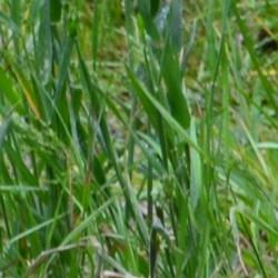 De l'herbe